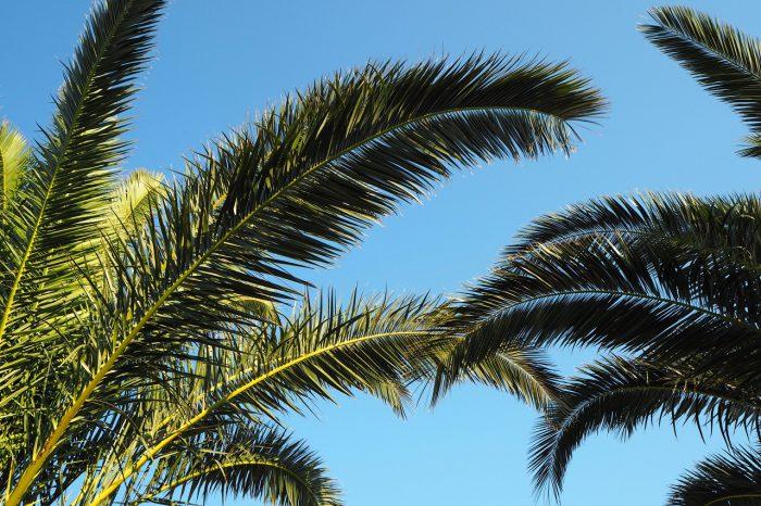 Tu iteraz - czerwiec 2017 - palmy