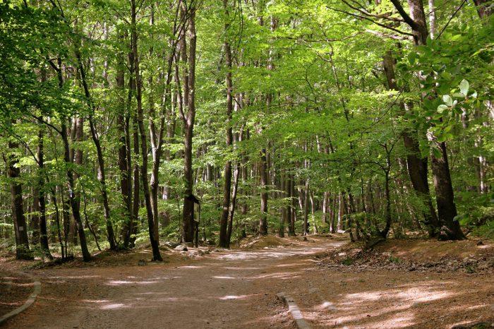 Ślęża - żółty szlak zPrzełęczy Tąpadła