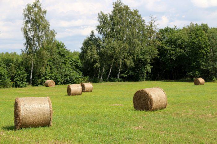 Tu iteraz - sierpień - pole