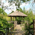 Jednodniowe wycieczki zWrocławia: Arboretum Leśne wStradomii