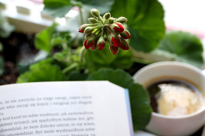 Tu iteraz - książka, kawa, pąk pelargonii