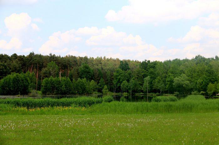 łąka wArboretum Leśnym wStradomii