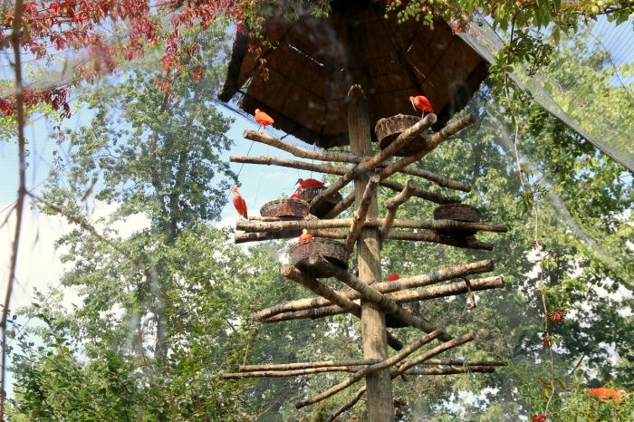 ibisy, zoo Opole