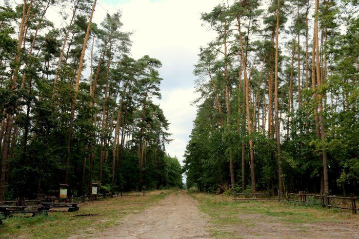 parking leśny wSosnówce