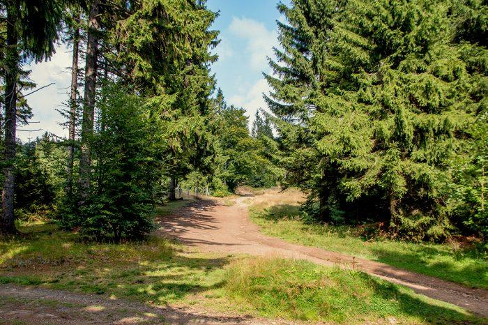 trasa naWielką Sowę odPrzełęczy Sokolej