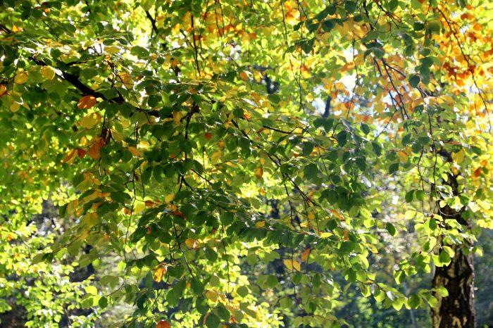 Trudny powrót zwakacji - podsumowanie września