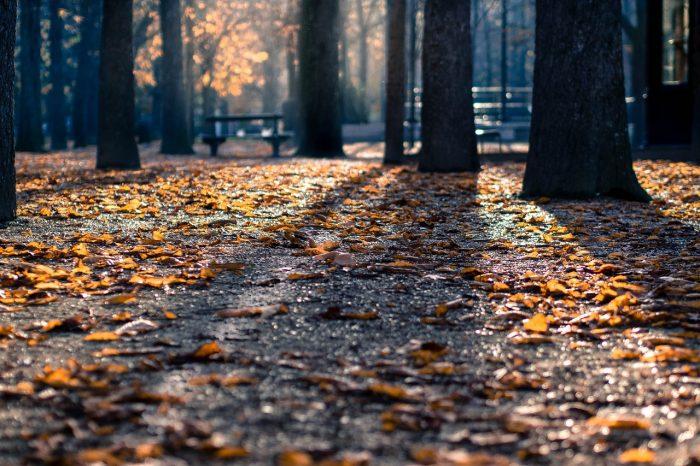 Jesień wparku