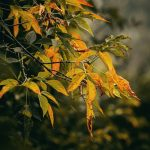 Złota jesień - podsumowanie października