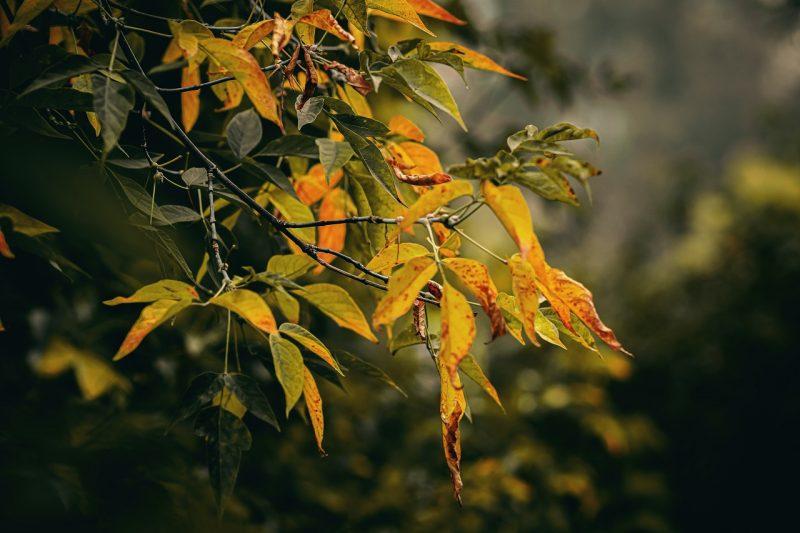Złota polska jesień - podsumowanie października