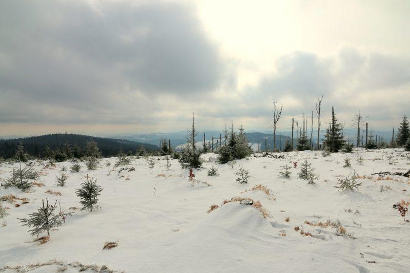 Wielka Sowa zimą