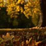 Sinusoida - mojepodsumowanie jesieni
