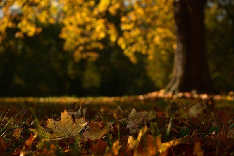 Sinusoida - moje podsumowanie jesieni