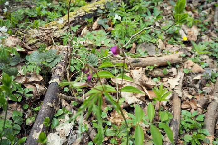 zielony Wąwóz Lipa